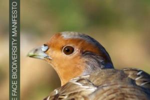 """Publicação do 5º Relatório """"Manifesto pela Biodiversidade"""""""