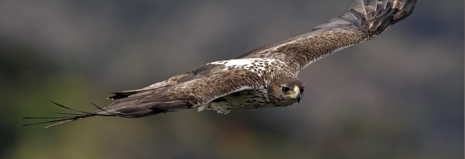 Descubra a importância da caça na gestão dos ecossistemas e na proteção da biodiversidade