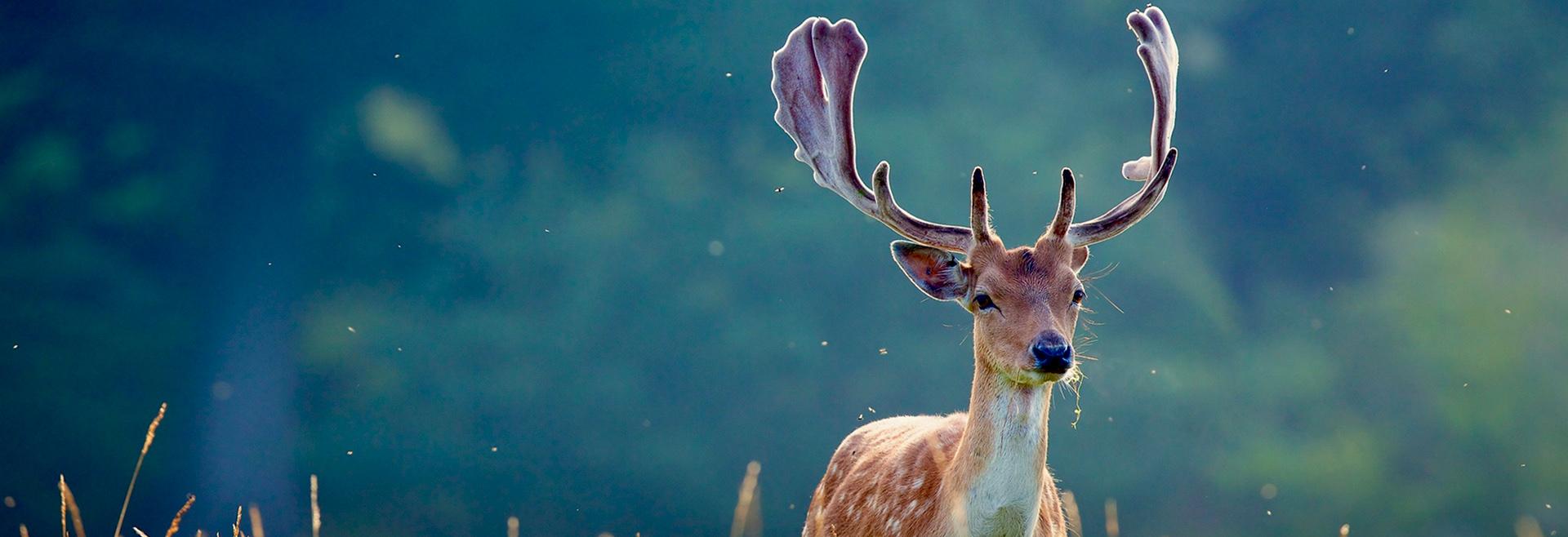 As espécies cinegéticas assumem um papel ecológico fundamental, providenciando diversos serviços de ecossistemas