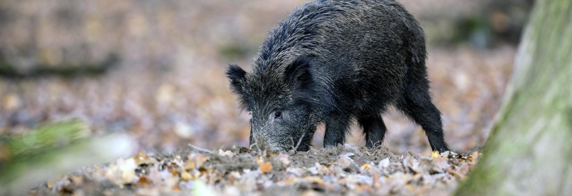 Colabore connosco. Ajude a conhecer e a proteger as espécies cinegéticas e a biodiversidade